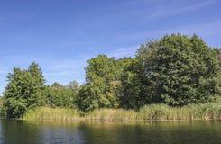 Flod nära skog Royaltyfria Foton