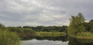 Flod nära skog Royaltyfri Foto