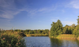 Flod nära skog Arkivfoton