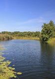 Flod nära skog Arkivbilder