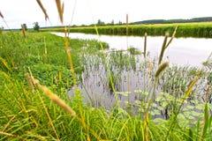 Flod Neman på sommar i Vitryssland Arkivbilder