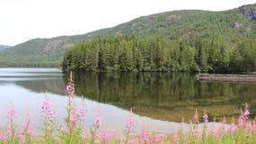Flod- och berglandskap med pinjeskogen fotografering för bildbyråer