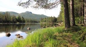 Flod- och bergsikt med pinjeskogen arkivfoto