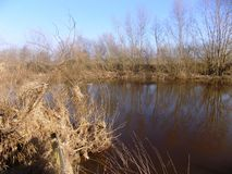 Flod och buskar, Northumberland, UK Arkivfoton