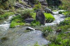 Flod och färgrik skog för höst Arkivfoton