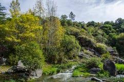 Flod och färgrik skog för höst Arkivbild