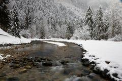 Flod och granar royaltyfria foton