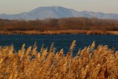 Flod och kullarna Fotografering för Bildbyråer