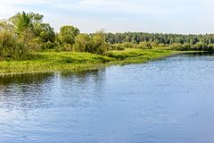 Flod och kust med träd på en solig dag Royaltyfri Fotografi