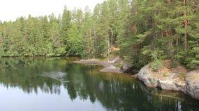 Flod och pinjeskog arkivbilder
