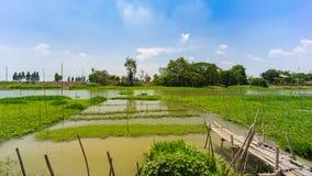 Flod och pir med vattenhyacinten Royaltyfri Foto