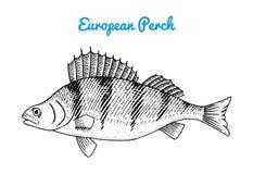 Flod- och sjöfisk Europeisk sittpinne Havsvarelser Sötvattens- akvarium Skaldjur för menyn inristad hand som in dras royaltyfri illustrationer