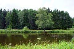 Flod och skog arkivfoton