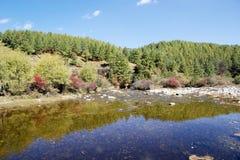 Flod och skog i den Chhume dalen, Bhutan Royaltyfri Foto