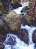 Flod och stenar i djup skog arkivbilder