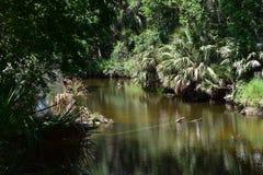 Flod och tjock buske arkivbild