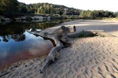 Flod och trä Royaltyfria Foton