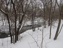 Flod och träd i vinter Arkivbild