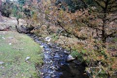 Flod- och trädlandskap som ser härligt royaltyfri foto