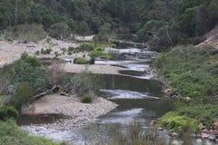 Flod och trees royaltyfri fotografi