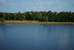 Flod på amasonen Royaltyfri Fotografi