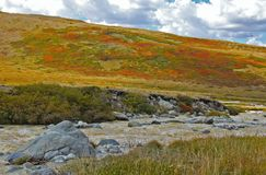 Flod på en bakgrund av steniga kullar Ukok, Altai berg Royaltyfri Foto