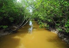 Flod på mangroveskogen royaltyfria foton