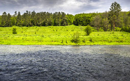 Flod på skogen Royaltyfria Bilder