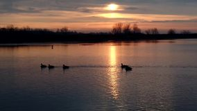 Flod på soluppgången arkivfilmer