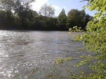Flod på sommar Fotografering för Bildbyråer