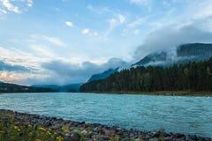 flod russia siberia för altaikatunregion Arkivbilder