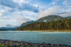 flod russia siberia för altaikatunregion Royaltyfri Bild