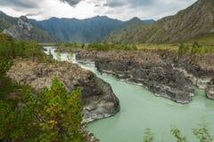 flod russia siberia för altaikatunregion Royaltyfria Foton