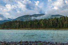 flod russia siberia för altaikatunregion Arkivfoton