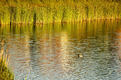 Flod sjö Royaltyfria Foton
