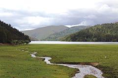 Flod sjö, grässlätt Royaltyfria Bilder