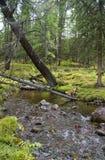 Flod, skog och en hund Arkivfoton