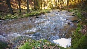 Flod som är lös, dal, doubrava, kaskad, höst, nedgång, färg, landskap som är pittoreskt, färg, liten vik, tjeck, flöda som är sto stock video