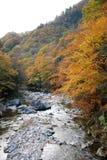 Flod som flödar till och med skog Arkivfoton