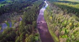Flod som flödar till och med skog royaltyfria foton