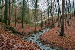 Flod som flödar till och med skogen i nedgång Arkivfoton
