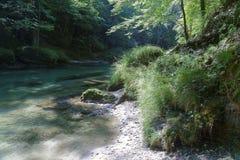 Flod som flödar till och med skogsmark Royaltyfri Bild