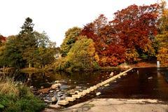 Flod som kliver stenar med höstfärger Royaltyfria Foton