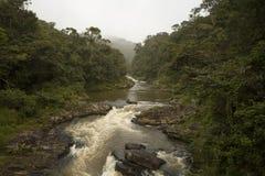 Flod som rusar ut ur en frodig djungel royaltyfri fotografi