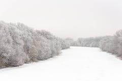 Flod som täckas med is och träd i rimfrostfrost Arkivbilder