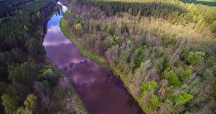Flod Sventoji som flödar till och med skog royaltyfri foto
