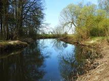 Flod Sysa och härliga träd i våren, Litauen Royaltyfri Bild