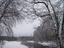 Flod Sysa och snöig träd i vinter, Litauen Royaltyfria Foton
