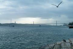 Flod Tagus med flyg över hennes fågel i Lissabon arkivbilder