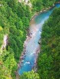 flod tara Arkivfoton
